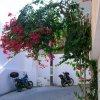 Bougainvillea and bikes.JPG
