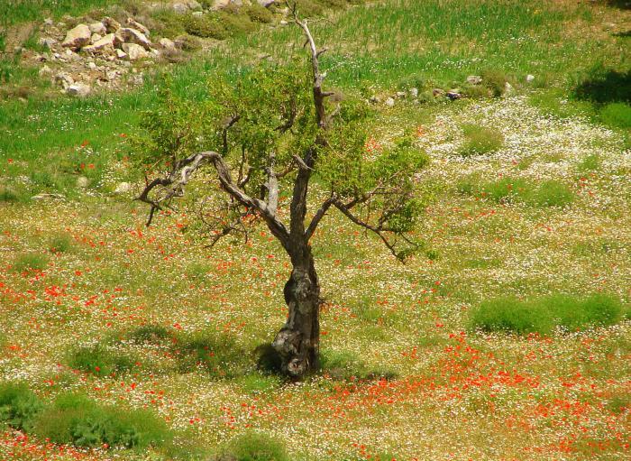 Colourful Crete