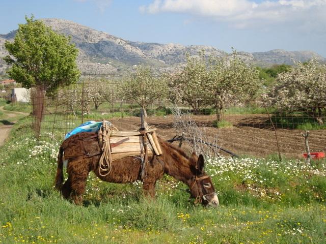 Katharo Donkey
