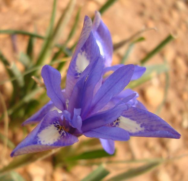Crete March 2010 013.JPG